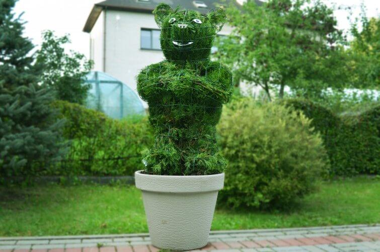bear topiary augalu skulptura meskiukas