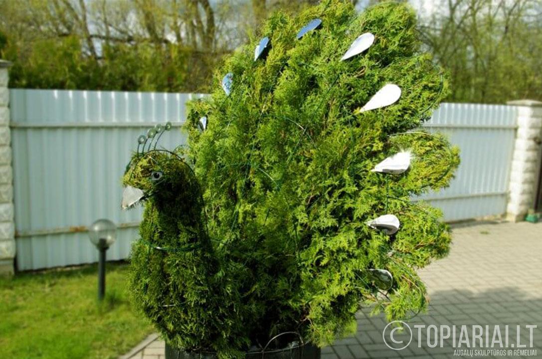 topiari povas topiary